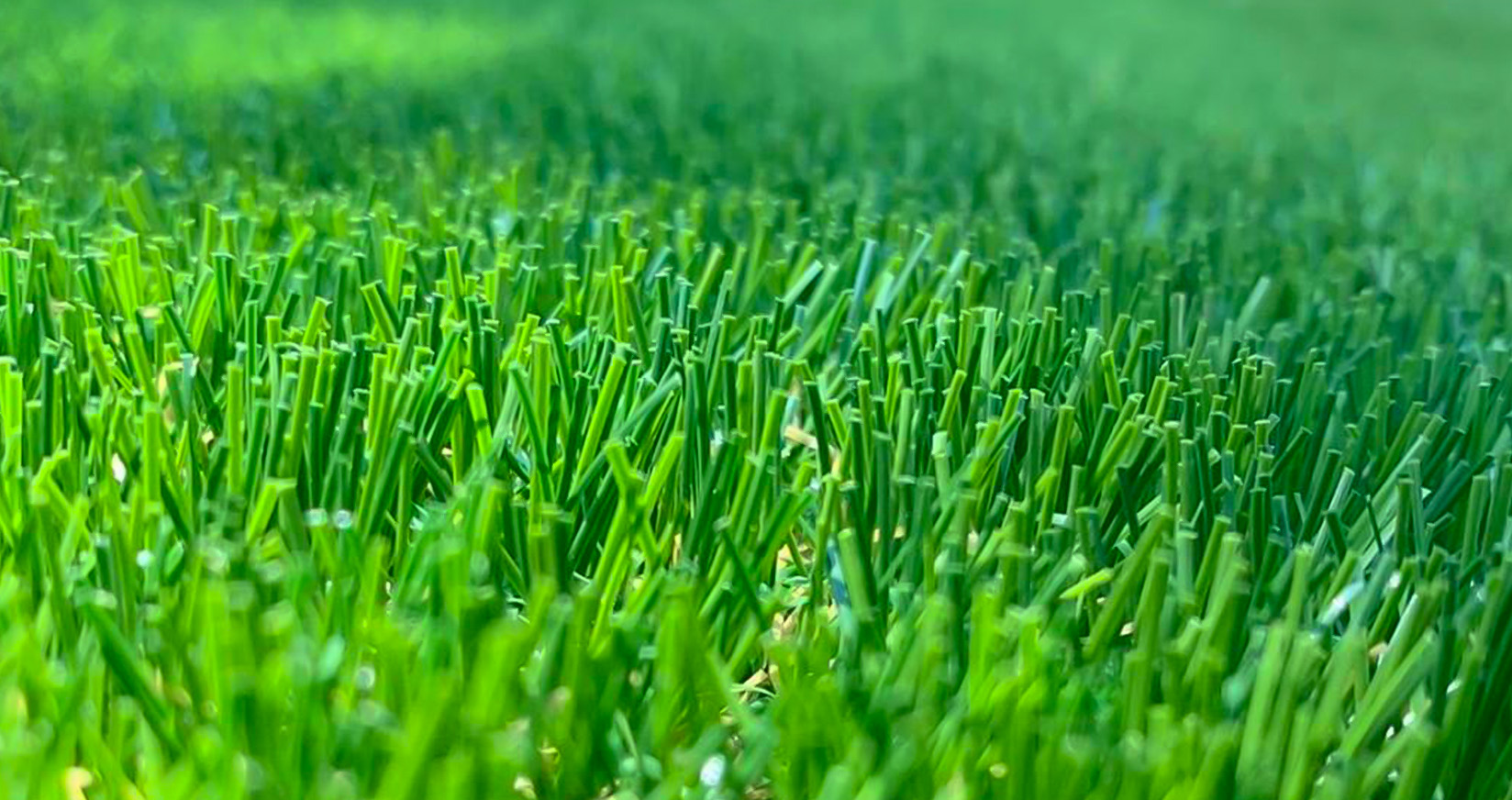 Perfect Green Grass